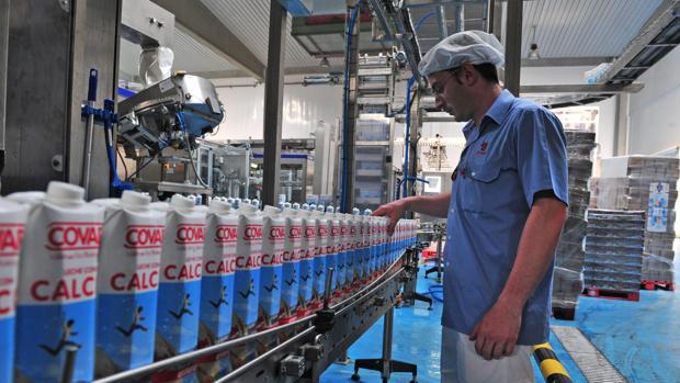Las explotaciones españolas reducirán su producción de leche en 31..000 toneladas