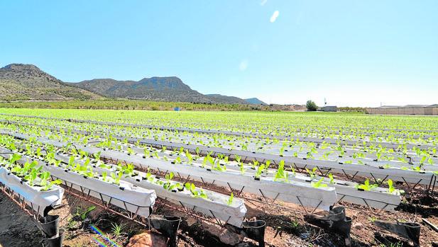 El cultivo hidropónico se hace sobre disoluciones minerales en vez de en suelo agrícola