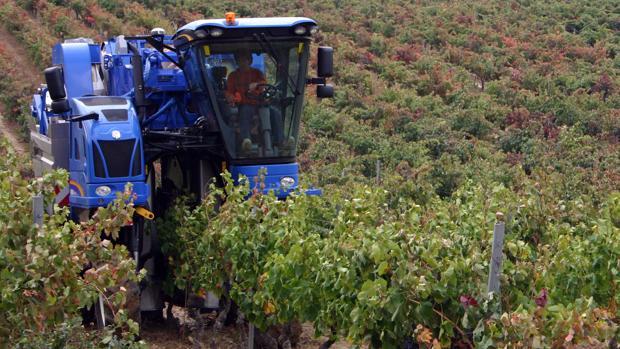 Las vendimiadoras de última generación recolectan la uva según su calidad y maduración