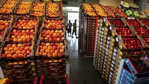 La exportación de frutas y hortalizas sube un 5%, hasta los 9.093 millones de euros, entre enero y septiembre