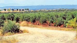 Podemos cree que en las vías rurales no prima el uso agrario