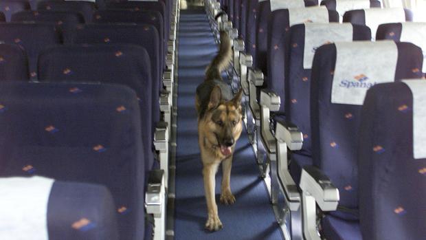 Un perro en un avión