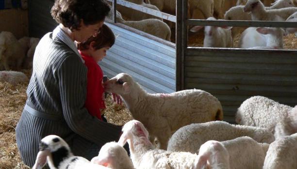 Una visita a la granja OvinoTG, en Sutillo del Campo (Palencia)