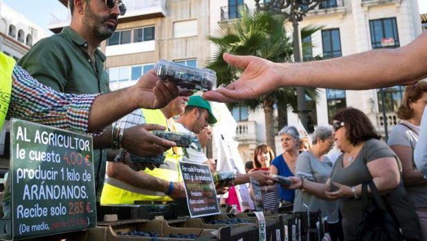 Reparto de arándanos en Huelva