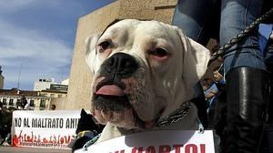 El maltrato animal lleva a la cárcel a un español por primera vez a causa de «una aberración»