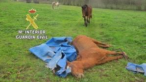 Golpean y arrastran a un caballo por una finca hasta matarlo