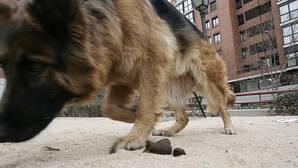 Ribó multará a los dueños de perros que no recojan las heces e insta a los vecinos a «ensuciar menos»