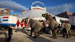 La Junta de Villa de Vallecas aprueba la prohibición de espectáculos circenses con animales