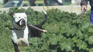 En Toledo existen 328 perros peligrosos y solo 120 tienen licencia municipal