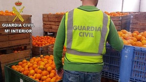 Cae una red que robó 31.500 kilos de naranjos en campos de la provincia de Valencia