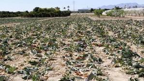 La sequía se agrava: El Segura y el Júcar, las cuencas con los pantanos más vacíos de España