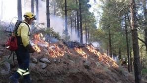Por qué los incendios forestales son buenos para el medio ambiente