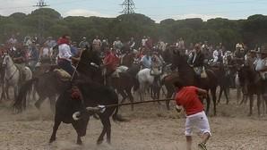 La Junta de Castilla y León impide la muerte del animal en el Toro de la Vega
