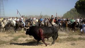 Razones que han llevado a la Junta de Castilla y León a prohibir ahora dar muerte al Toro de la Vega