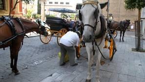 Un alcalde de Compromís impone que los caballos lleven pañales para no ensuciar las calles