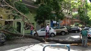 Cae un árbol y aplasta un vehículo aparcado en el barrio de Salamanca