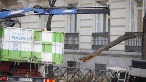 Condenado el Ayuntamiento de Madrid a indemnizar con 21.198 euros a una mujer por la caída de la rama