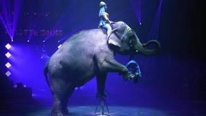 La Comunidad Valenciana se suma a Cataluña en la prohibición de circos con animales