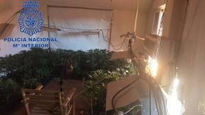La Policía acude a un incendio y descubre una plantación de marihuana