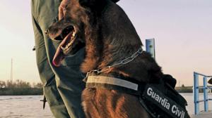 Un perro-policía que huele billetes: ha dado con 95.000 euros de dinero negro