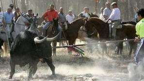 PP y PSOE de Tordesillas recurren juntos al TC la prohibición de matar al Toro de la Vega