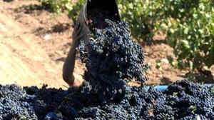Una vendimia con más vino pero menos consumidores