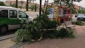 Herida una mujer de 45 años tras la caída de una rama en el Ensanche de Vallecas