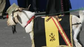 Pepe, la cabra de La Legión, se retira a la reserva