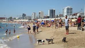 La playa canina, éxito limitado