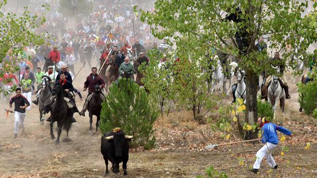 El pasado septiembre Tordesillas celebró la última edición del Toro de la Vega