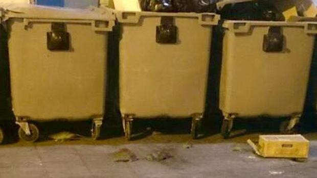 Ratas junto a unos contenedores en el centro de Alicante.