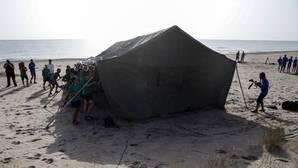 Nacen las primeras veinte crías de tortuga boba custodiadas en una playa de Valencia