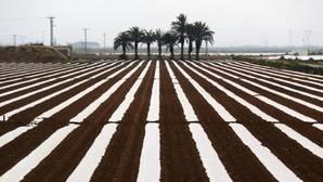 Los agricultores del trasvase Tajo-Segura piden un riego de socorro o iniciarán movilizaciones