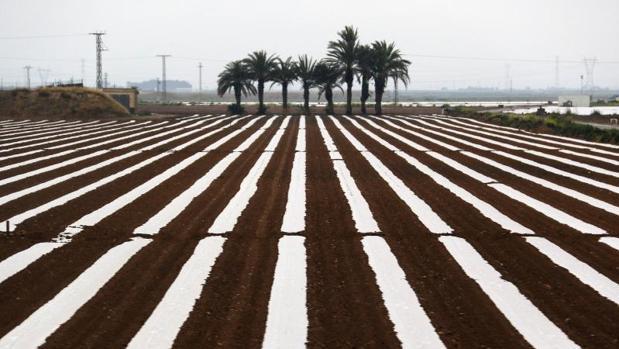 Cultivos en regadíos dependientes del trasvase Tajo-Segura.