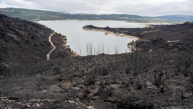 Superficie arrasada por las llamas en el incendio de Entrimo