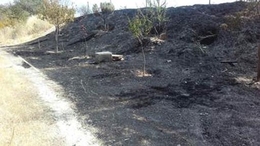 El Parque Manolito Gafotas, tras el incendio
