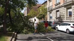La caída de ramas se duplica durante los dos últimos años en Madrid