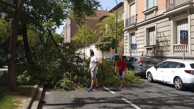 Imagen de la rama que cayó en la calle Juan Bravo el miércoles