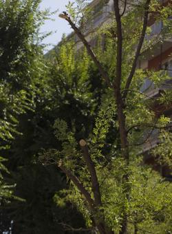 Otro árbol dañado en Juan Bravo