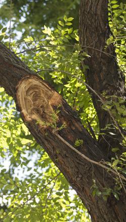 Una rama destrozada en el bulevar de la calle Juan Bravo