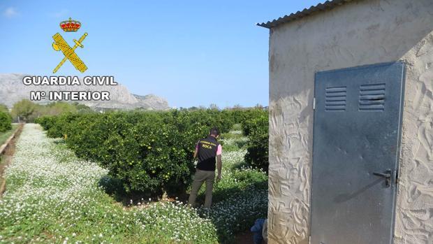 Una de las plantaciones de naranjos donde se produjeron robos
