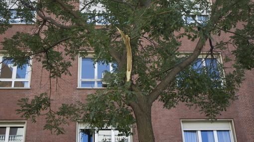Estado de uno de los árboles de la calle Juan Bravo