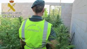 La Guardia Civil desmantela una de las principales redes de producción de marihuana en Valencia