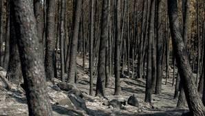 La ola de incendios en la provincia de Orense remite al dar por controlado el de Entrimo