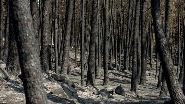 El fuego en la localidad orensana de Entrimo ha sido el mayor del verano en Galicia, con 2.800 hectáreas