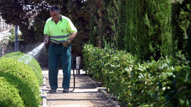 Jardinero regando un parque público