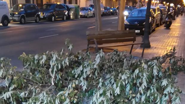 Imagen de un árbol tomada en la calle de la Reina la noche del martes