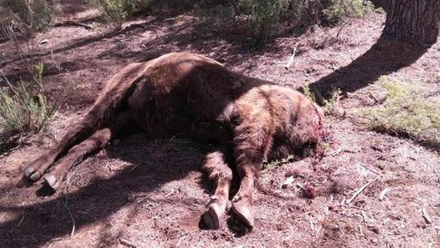 El bisonte hallado decapitado