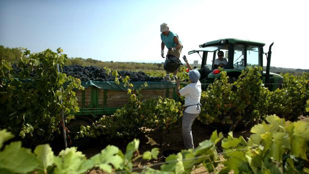 Vendimiadores recogiendo la uva