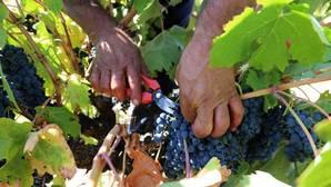 Cinco planes para disfrutar de la vendimia en Castilla y León